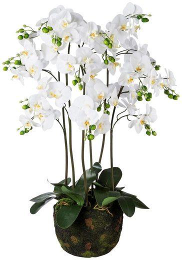 Kunstpflanze »Orchidee Phalaenopsis«, auf Moosballen, H: 95 cm