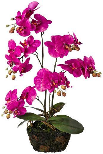 Kunstpflanze »Orchidee Phalaenopsis«, auf Moosballen, H: 60 cm