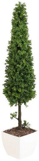 Kunstpflanze »Buchsbaumpyramide«, im Kunststofftopf, H: 90 cm