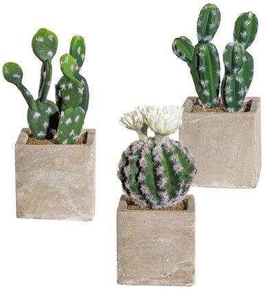 Kunstpflanze »Kakteen Mix«, 3er Set, H: 20 cm