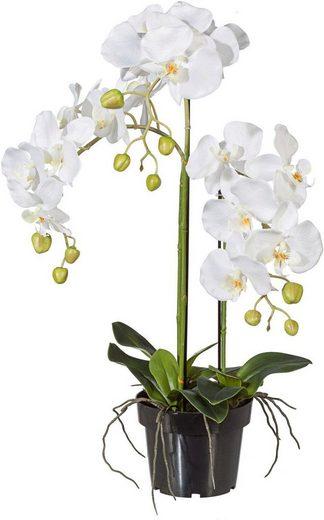 Kunstpflanze Orchidee, Creativ green, Höhe 62 cm