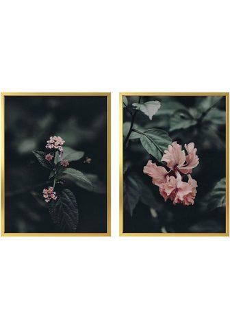 Plakatas »Rosa Blüten« (Rinkinys 2 St....