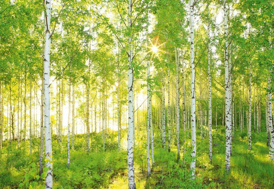 Fototapete birkenrinde  Wald Fototapete kaufen » Dschungel & Bambus   OTTO