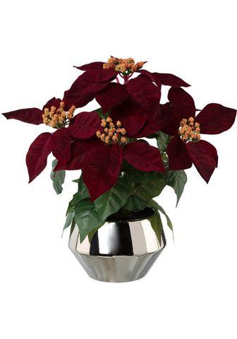 Dirbtinė gėlė »Weihnachtsstern«
