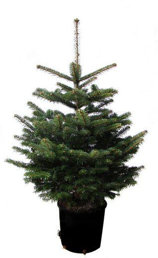 weihnachtsbaumland weihnachtsbaum echte nordmanntanne zum. Black Bedroom Furniture Sets. Home Design Ideas