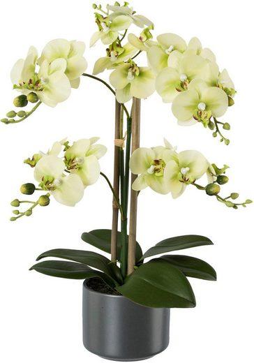 Kunstpflanze »Orchidee«, Creativ green, Höhe 38 cm