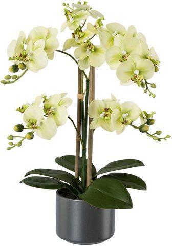 Creativ green Kunstpflanze »Orchidee« aukštis 38 cm