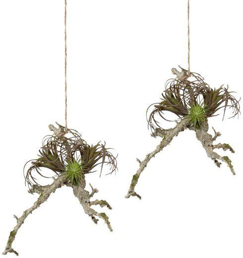 Kunstpflanze »Hängeast mit Tillandsie«, 2er Set, H: 19 cm