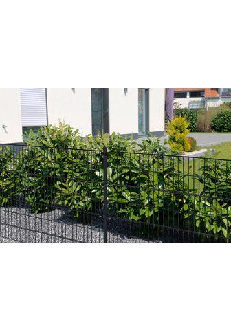 HOME DELUXE Забор 120 cm hoch 9 Matten для 6 m Заб...