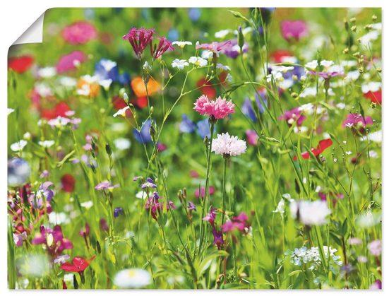 Artland Wandbild »Blumenwiese I«, Blumenwiese (1 Stück)