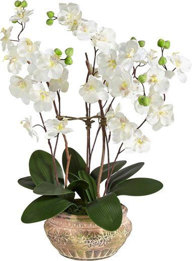 Kunstpflanze »Orchidee«, Schneider, Höhe 58 cm