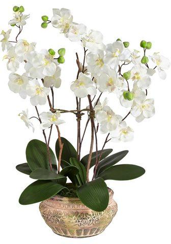 Schneider Kunstpflanze »Orchidee« aukštis 58 cm