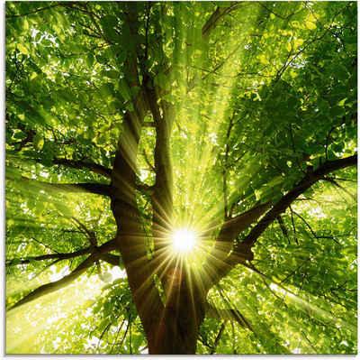Artland Glasbild »Sonne strahlt explosiv durch den Baum«, Bäume (1 Stück)