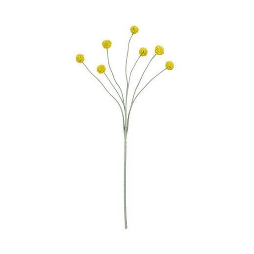 BUTLERS FLORISTA »Craspedia Trommelstock 59cm«