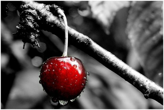 Art & Pleasure Metallbild »Cherry tree«, Foto