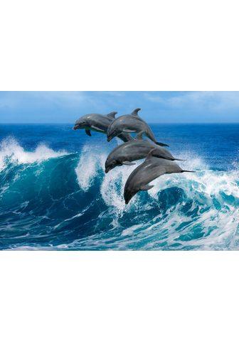 PAPERMOON fototapetas »Playful Dolphin...