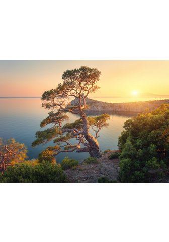 PAPERMOON fototapetas »Tree Mountain S...