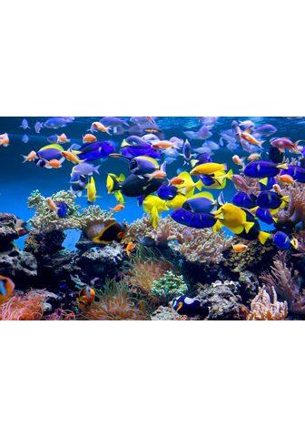 PAPERMOON fototapetas »Aquarium« Vlies...