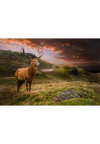 PAPERMOON fototapetas »Red Deer« Vlies...