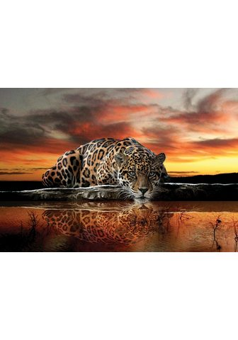 CONSALNET Фотообои »Jaguar Sonnenuntergang...