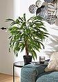 Kunstpflanze »Weeping-Ficus«, Bild 3