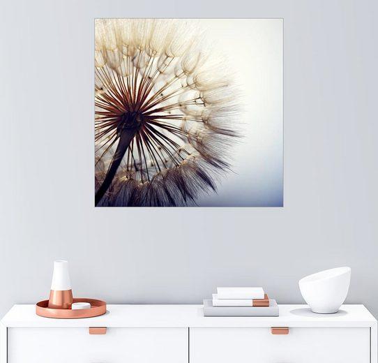Posterlounge Wandbild, Große Pusteblume