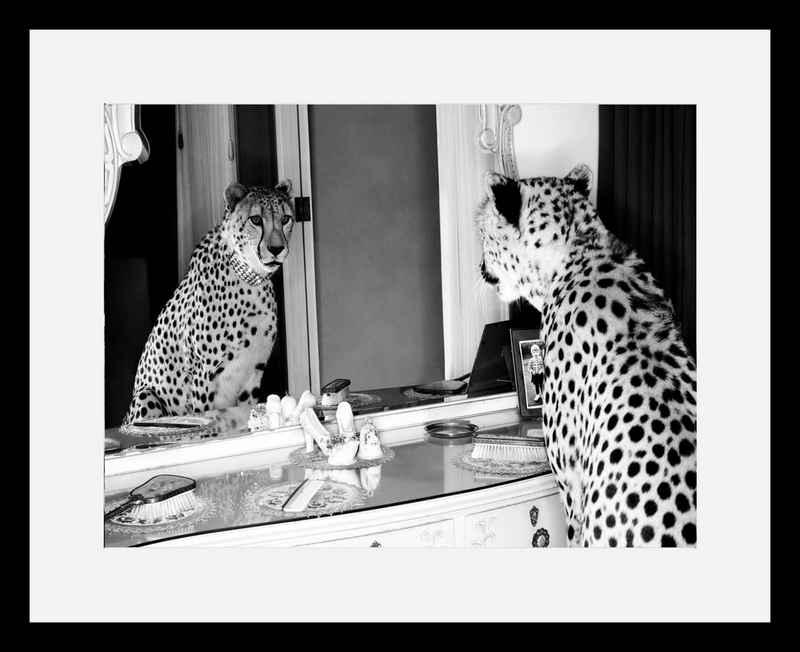 G&C Bild »Cheetah Looking In Mirror«, mit Rahmen, 50/40 cm