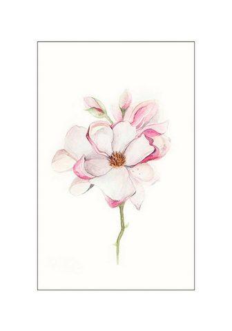 KOMAR XXL Plakatas »Magnolia Blossom«