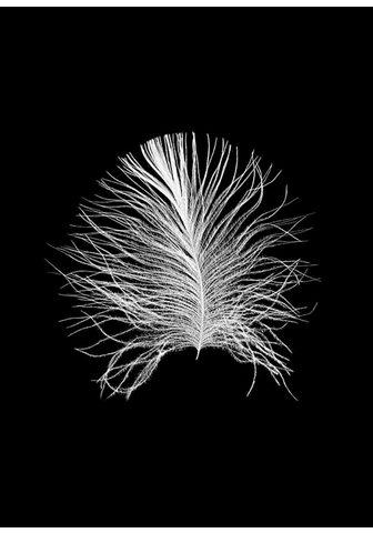 KOMAR XXL Plakatas »Feather Black«