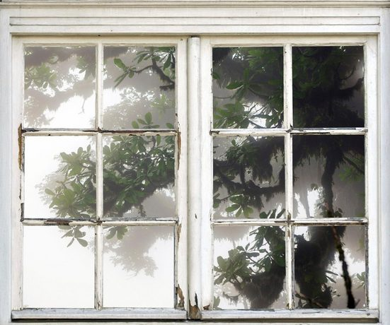queence Wandsticker »Baum im Nebel«