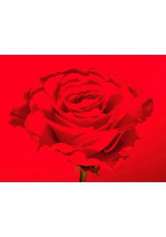 RASCH Fototapetas »Selection«