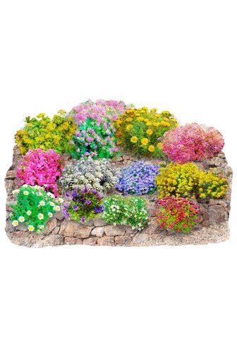 BCM Beetpflanze »Trockenmauer-Set«