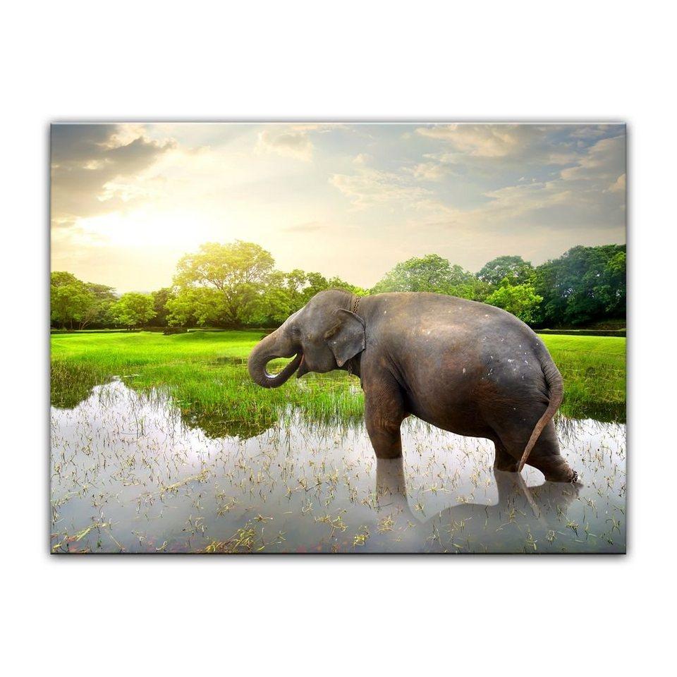 Bilderdepot24 Leinwandbild, Leinwandbild - Elefant im ...