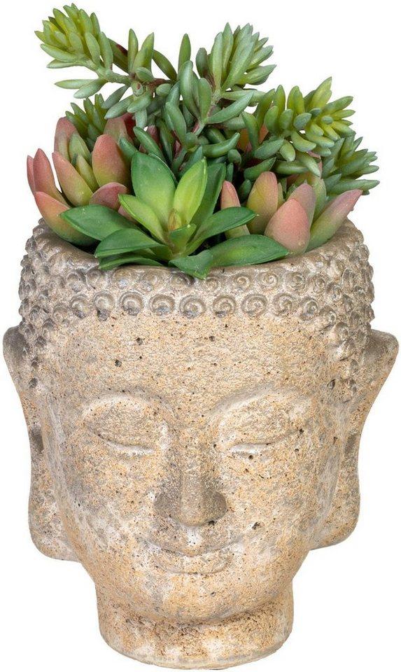 Künstliche Zimmerpflanze »Sukkulentenarrangement ...