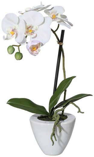 Kunstpflanze »Orchidee Phalaenopsis«, im Keramiktopf, Höhe 36 cm, weiß