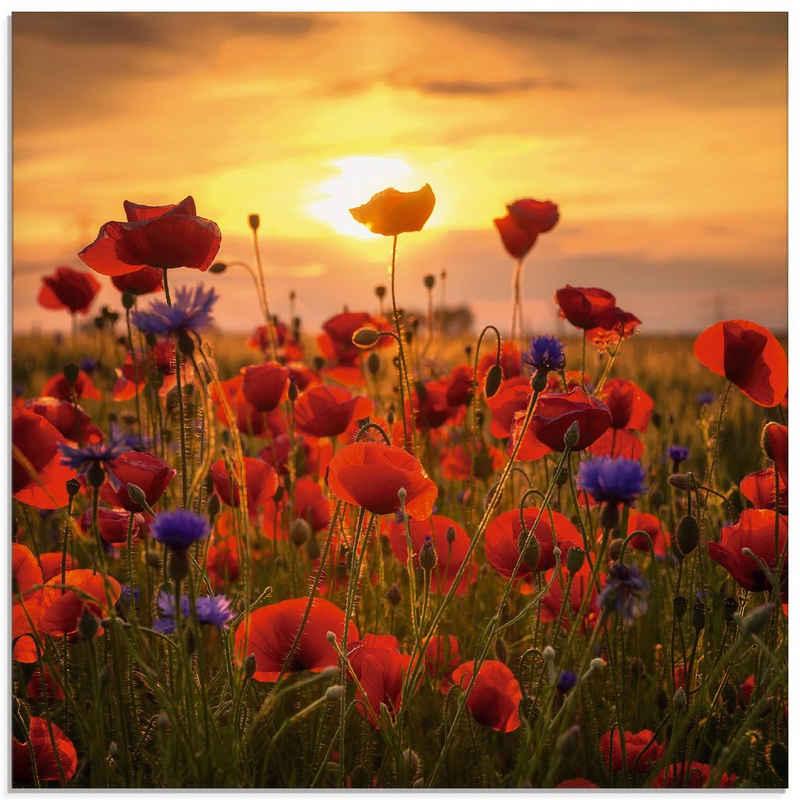 Artland Glasbild »Mohnblumen im Abendlicht«, Blumen (1 Stück)