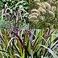 BCM Gräser »Lampenputzergras Mix (3 Sorten)« Spar-Set, Lieferhöhe ca. 40 cm, 3 Pflanzen, Bild 3