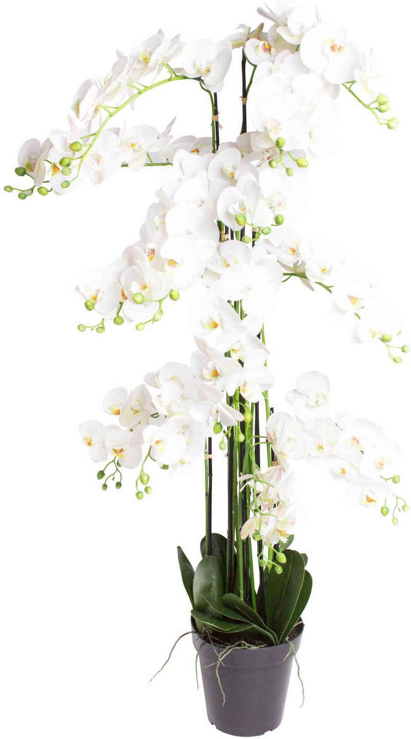 Kunstorchidee »Orchidee Bora« Orchidee, Botanic-Haus, Höhe 140 cm