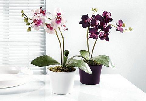 Home affaire Kunstblume »Orchidee« (2tlg.) in bunt