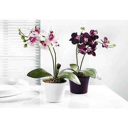 Home affaire SET: Orchideen (2tlg.)