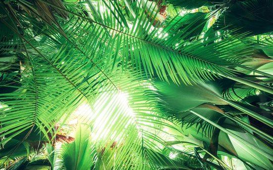 KOMAR Fototapete »Dschungeldach«, Bahnbreite: 50 cm; Motiv bestehend aus mehreren Bahnen