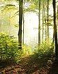 Marburg Fototapete, gut lichtbeständig, restlos abziehbar, Bild 1