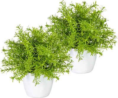 Künstliche Zimmerpflanze »Mikail« Springerii-Busch, my home, Höhe 25 cm, 2er Set