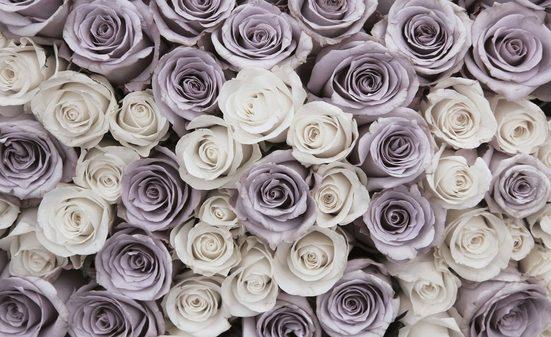 CONSALNET Fototapete »Blumen Rosen«, Vlies, in verschiedenen Größen