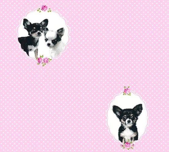 Vliestapete »Little Stars mit Chihuahuas«