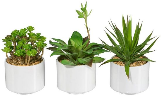 Kunstpflanze »Sukkulenten«, Creativ green, Höhe 20 cm