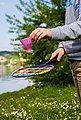 Schildkröt Funsports Badmintonschläger »Schildkröt-Funsports Federball Set Junior«, Bild 3