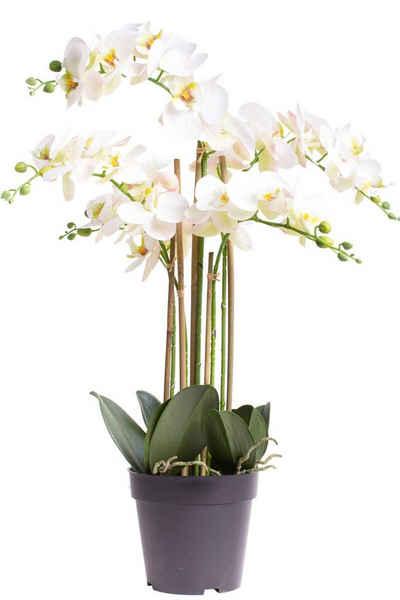 Kunstorchidee »Orchidee Bora« Orchidee, Botanic-Haus, Höhe 60 cm