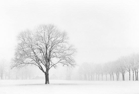 Architects Paper Fototapete »Standing Alone«, (Set, 4 St), Winter Wald, Vlies, glatt