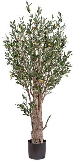 Kunstpflanze »Olivenbaum«, mit Früchten, H: 150 cm
